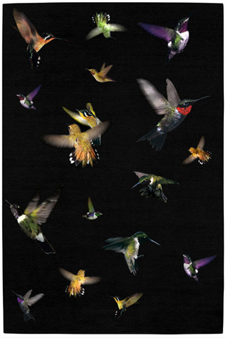 The hummingbird rug by alexander mcqueen
